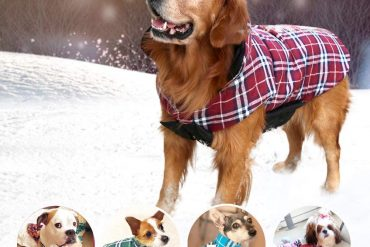 Best Dog Jacket