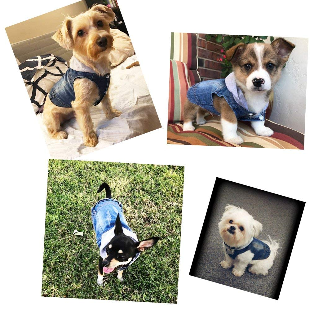SILD Cool Blue Denim Jeans Dog Jacket