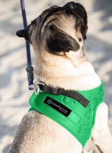 Comfort Fit Metric USA Small Dog Harnesses