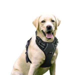 RABBITGOO Dog Harness No-Pull Pet Harness